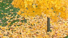 Fallen leafs off center Stock Footage
