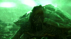 Turtle (bdk) Stock Footage
