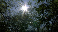 Stock Video Footage of Sun through trees 720 24p