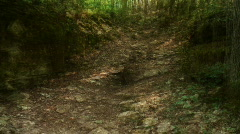 Forest fast blurred Stock Footage