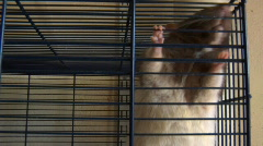 rats in a cage - stock footage