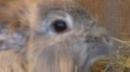 Rabbit eating close up Stock Footage