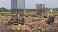 Vietnam: Rice Harvesting Stock Footage