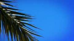 Palm Tree Leaf - stock footage