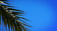 Palm Tree Leaf Stock Footage