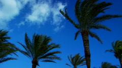 Palm Tree Pan Stock Footage