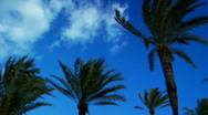 Palm Tree Pan Stock Footage