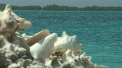 Conch shells Stock Footage