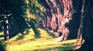 Trees heatwaves surreal (r) Stock Footage