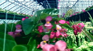 Greenhouse flowers artistic Stock Footage