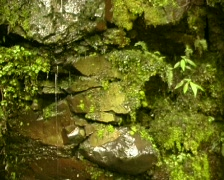 Water dripping down mossy rocks - stock footage