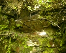 Water dripping down mossy rocks Stock Footage
