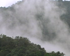 Mist rising  over cloudforest Stock Footage
