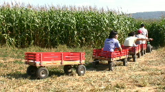 Wagon ride into the cornfields - stock footage