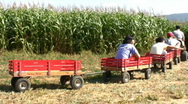 Stock Video Footage of Wagon ride into the cornfields