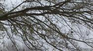Birds tree 2 Stock Footage