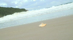 HD: Shell on a beach with waves Stock Footage