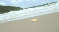 Stock Video Footage of HD: Shell on a beach with waves