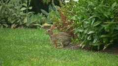 Garden bunny Stock Footage