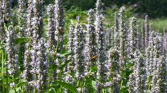 Honeybee bumblebee beetles Stock Footage