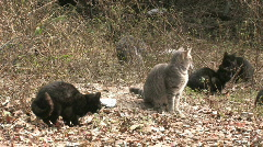 Stock Video Footage of Cats in wild abandoned scared HD
