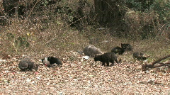Cats in wild abandoned HD Stock Footage