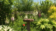 Stock Video Footage of birdbath garden