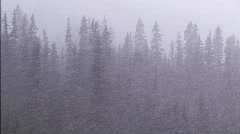 Blizzard in the forest 2 - stock footage