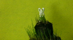 Easter bunny and growing grass time-lapse 1 Stock Footage