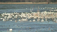 Reed with frozen ice pieces at seashore 3 Stock Footage
