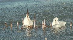 Reed with frozen ice pieces at seashore 4 Stock Footage