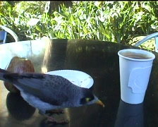 Coffee with bird Stock Footage