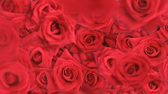 Falling Roses Stock Footage