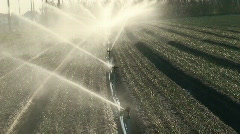 Sprinkler irrigation in cultivated field - stock footage