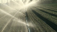 Sprinkler irrigation in cultivated field Stock Footage