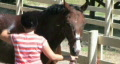 Horse Being Groomed Footage