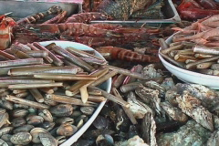 Delicious shellfish - stock footage