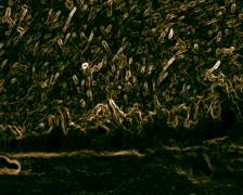 Alien Bacteria - stock footage