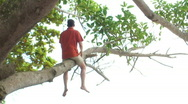 Stock Video Footage of HD: Man relaxing in a tree