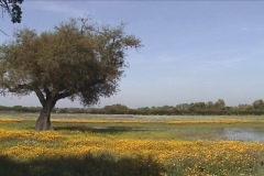 Rural spring scene Stock Footage