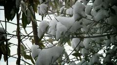 Snowy trees Stock Footage