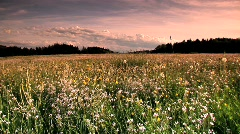 A flowery meadow Stock Footage