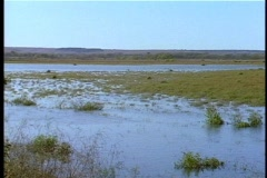 marsh - stock footage