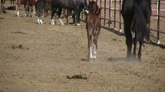 HDV: Mother and Foal Walk Away Stock Footage