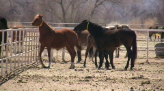 HDV: Bucking Horse Stock Footage