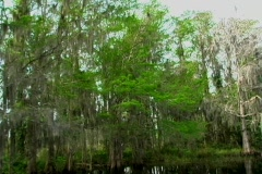 Florida Everglades (8) - stock footage