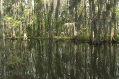 Florida Everglades (9) - stock footage
