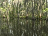 Florida Everglades (9) Stock Footage