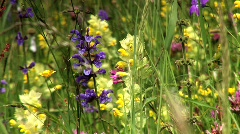 Flowers in a meadows Stock Footage