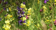 Stock Video Footage of Flowers in a meadows